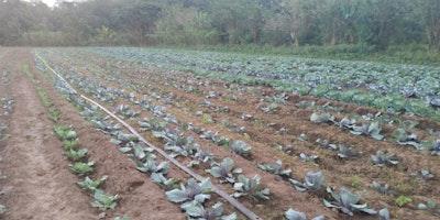 10 Acre farmland with farm house for sale