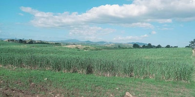 Farmland For Sale
