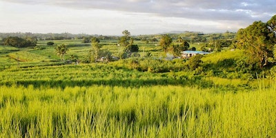 13 Acre Farmland For Sale