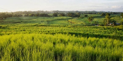 13 Acre Farmland For Sale