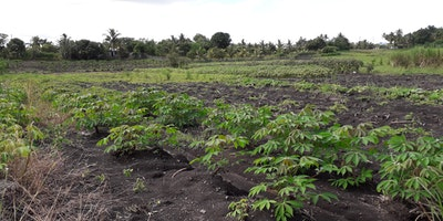 15 Acres Agricultural Land for Sale